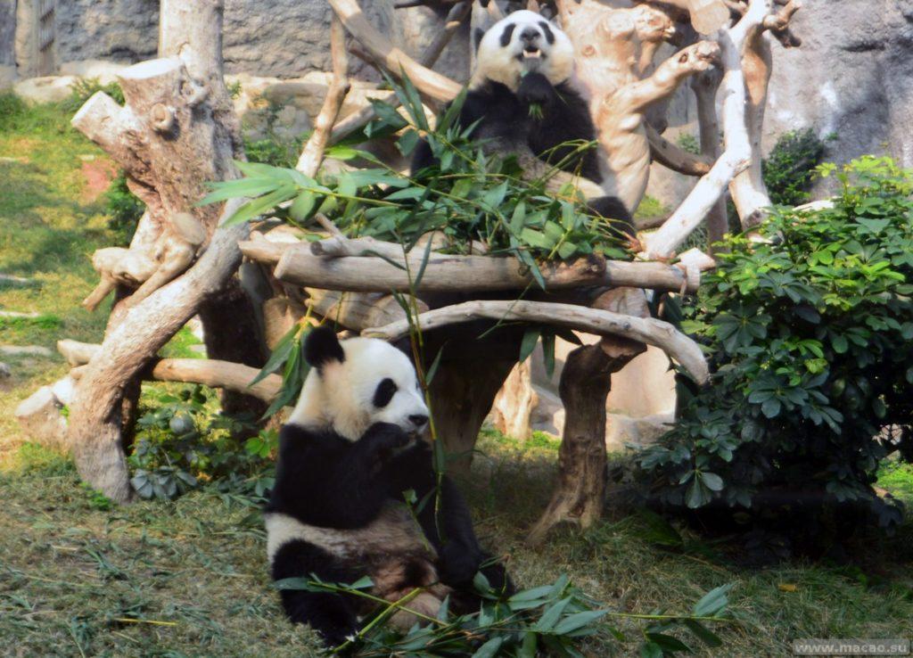 Павильон с пандами в Макао